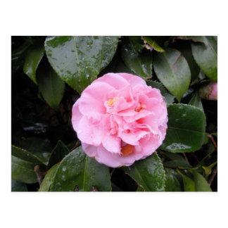 Cartão Postal Preaty no rosa