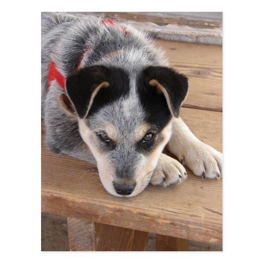 Cartão Postal Prejuízo do filhote de cachorro