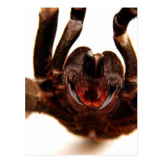 Cartão Postal Presas - imagem 2 da arte do Tarantula