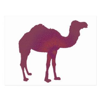 Cartão Postal Prestígio do camelo