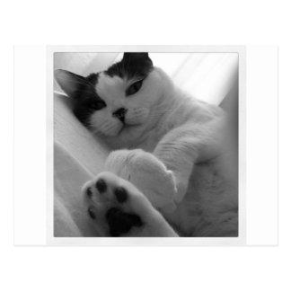 Cartão Postal Preto & branco do gato