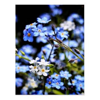 Cartão Postal Primavera azul