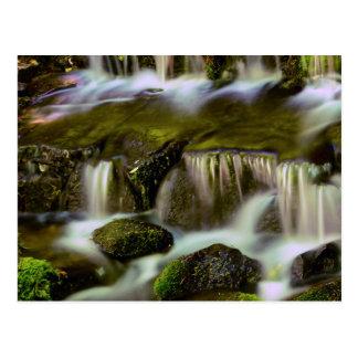 Cartão Postal Primavera da samambaia, parque nacional de