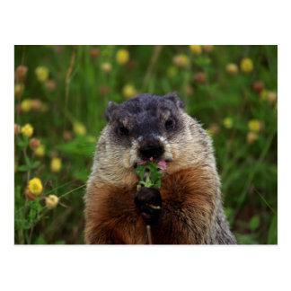 Cartão Postal Primavera de cheiro Groundhog