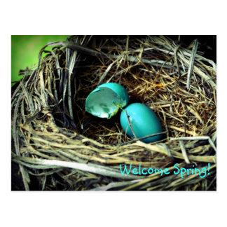 Cartão Postal Primavera do ninho do ovo do pisco de peito