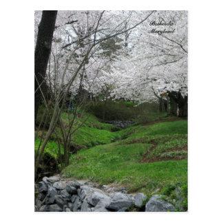 Cartão Postal Primavera em Bethesda, Maryland