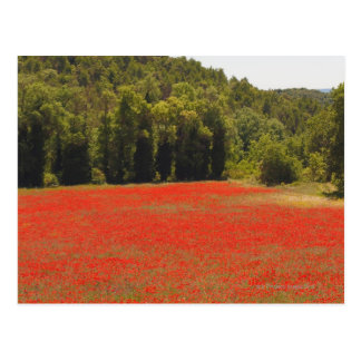 Cartão Postal Primavera vermelho Provence France das papoilas