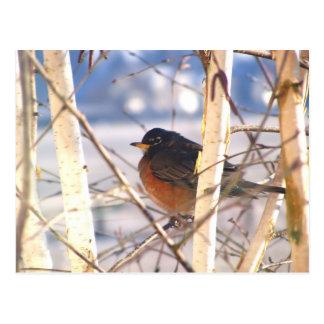 Cartão Postal Primeiro pássaro