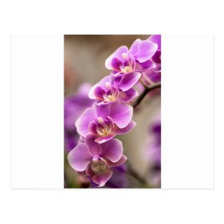 Cartão Postal Profundamente - corrente de flor cor-de-rosa da