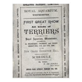 Cartão Postal Propaganda de poster o clube aliado de Terrier