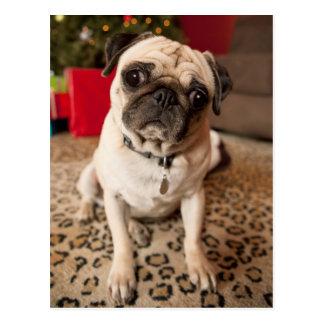 Cartão Postal Pug que senta-se no tapete, árvore de Natal