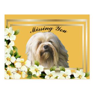 Cartão Postal Quadro do ouro de Lowchen com flores do dogwood