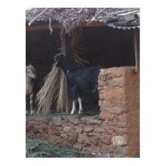 Cartão Postal Quando as cabras se moverem sobre