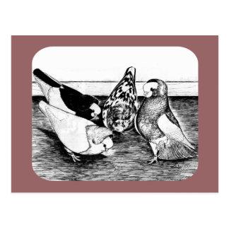 Cartão Postal Quarteto do Tumbler de Komorner