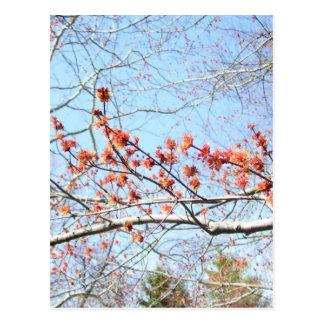 Cartão Postal Queda acre das naturezas no ó