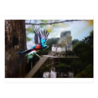 Cartão Postal Quetzel em Tikal