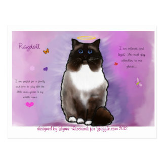 Cartão Postal Ragdoll bonito doce