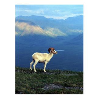 Cartão Postal Ram de Dahl que está no cume gramíneo, montanhas