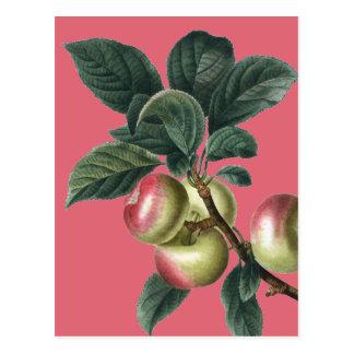 Cartão Postal Ramo de maçãs vermelhas