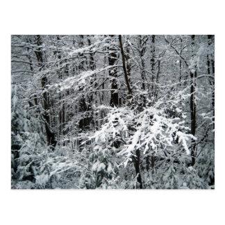 Cartão Postal Ramos de árvore congelados