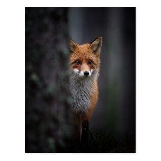 Cartão Postal raposa
