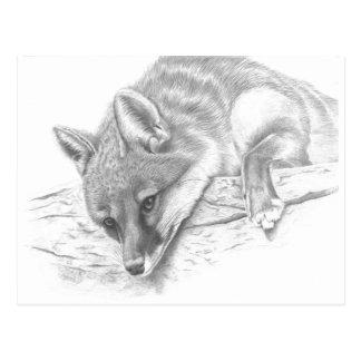 Cartão Postal raposa 59