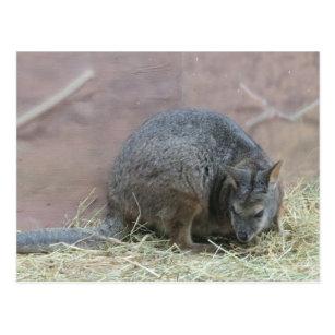 presentes rato canguru zazzle com br