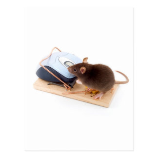 Cartão Postal Rato inteligente