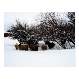 Cartão Postal Recolhendo o rebanho na neve