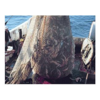 Cartão Postal Rede Trawling dos peixes