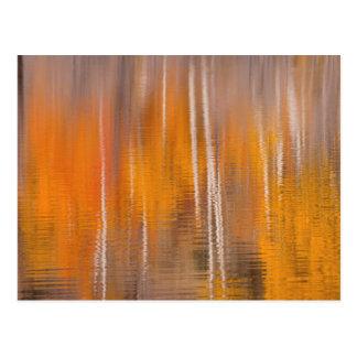 Cartão Postal Reflexões do outono na lagoa | Winthrop do castor,