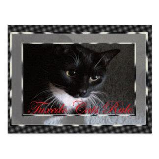 Cartão Postal Regra dos gatos do smoking