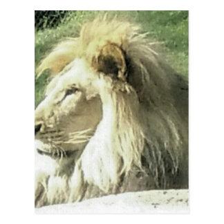 Cartão Postal Rei de animais