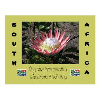 Cartão Postal Rei Protea