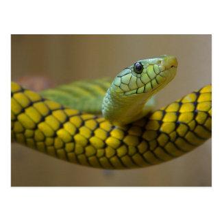 Cartão Postal Réptil do cobra