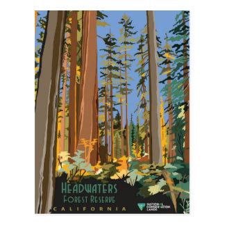 Cartão Postal Reserva da floresta