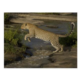 Cartão Postal Reserva do jogo de Kenya, Mara do Masai. Africano