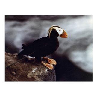 Cartão Postal Retrato adornado do papagaio-do-mar