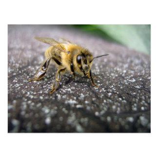 Cartão Postal Retrato de uma abelha do mel
