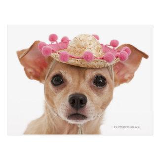 Cartão Postal Retrato do cão pequeno no sombrero