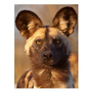 Cartão Postal Retrato do cão selvagem