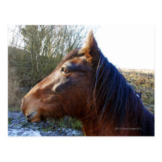 Cartão Postal Retrato do cavalo marrom no dia frio que olha