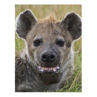Cartão Postal Retrato manchado da hiena, croduta do Crocuta,