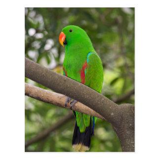 Cartão Postal Retrato verde do papagaio