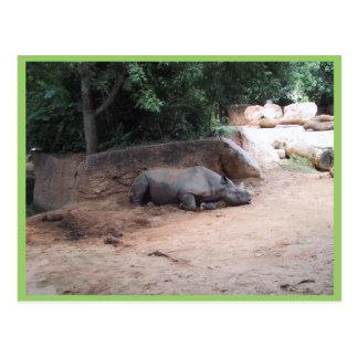 Cartão Postal Rhinocers que dorme sob a máscara