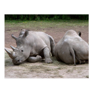 Cartão Postal Rhinos