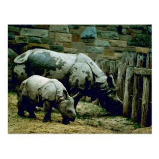 Cartão Postal Rhinos indianos