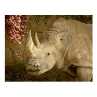 Cartão Postal Rinoceronte