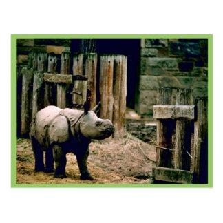 Cartão Postal Rinoceronte indiano
