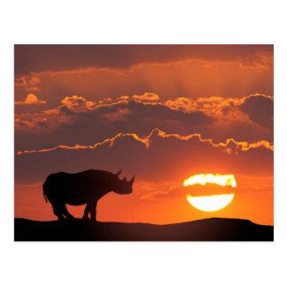 Cartão Postal Rinoceronte no por do sol, Masai Mara, Kenya